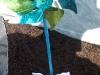 2. Grabbepflanzung - Detailansicht